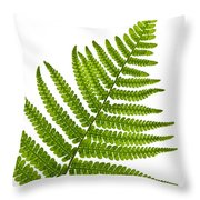 Fern Leaf Throw Pillow by Elena Elisseeva