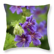 Geranium Himalayense Throw Pillow by Frank Tschakert