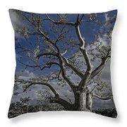 Ghost Tree Throw Pillow by Debra and Dave Vanderlaan