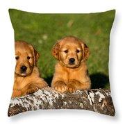 Golden Retriever Puppies Throw Pillow by Linda Freshwaters Arndt