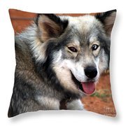 Miley The Husky With Blue And Brown Eyes  Throw Pillow by Doc Braham