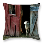 My Little Friend Throw Pillow by Diana Angstadt