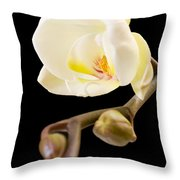 Orchid Throw Pillow by Ilze Lucero