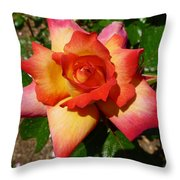 Rainbow Sorbet Rose Throw Pillow by Denise Mazzocco