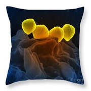 Streptococcus Pyogenes Bacteria Sem Throw Pillow by Science Source
