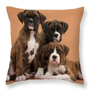 Three Boxer Puppies Throw Pillow by Mark Taylor