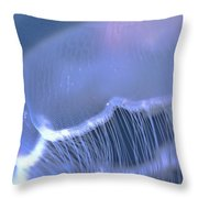 Underwater View Of A Moon Jellyfish Throw Pillow by Thomas Kline