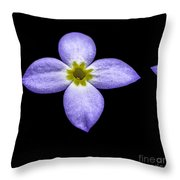 Bluets Throw Pillow by Thomas R Fletcher