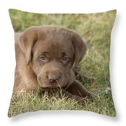 Chocolate Labrador Puppy Throw Pillow by Linda Freshwaters Arndt