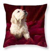 Golden Retriever Puppy Throw Pillow by Angel  Tarantella