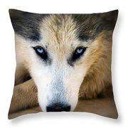 Husky  Throw Pillow by Stelios Kleanthous