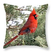 Northern Cardinal - Male Throw Pillow by Jim Nelson