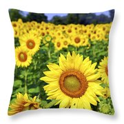 Sunflower field Throw Pillow by Elena Elisseeva