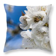 White Cherry Blossoms Blooming In The Springtime Throw Pillow by Nila Newsom