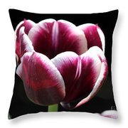 Triumph Tulip named Jackpot Throw Pillow by J McCombie