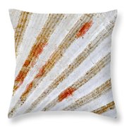 Seashell Surface Throw Pillow by Elena Elisseeva