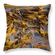 Bull Kelp Blades On Surface Background Texture Throw Pillow by Stephan Pietzko