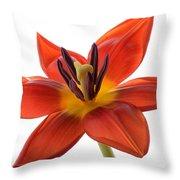 Tulip Throw Pillow by Mark Johnson