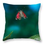 89 Butterfly In Flight Throw Pillow by Stephen Dalton