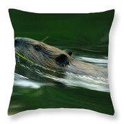 A Busy Beaver Throw Pillow by Jeff  Swan