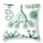 A Collection Of Stauromedusae Throw Pillow by Ernst Haeckel