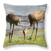 A Mother's Lesson Throw Pillow by Carol Groenen