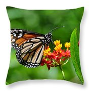 A Place To Settle Down Throw Pillow by Kathy Baccari