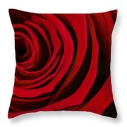A Rose For Valentine's Day Throw Pillow by Adam Romanowicz
