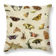 A Study Of Insects Throw Pillow by Jan Van Kessel