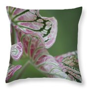 Abstract by Nature Throw Pillow by Nola Lee Kelsey