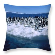 Adelie Penguins On Icefloe Antarctica Throw Pillow by Colin Monteath