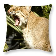 Adult Florida Bobcat Throw Pillow by Anne Rodkin