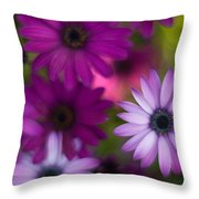 African Daisy Collage Throw Pillow by Mike Reid