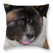 Akita - A Dog's Tale Throw Pillow by Christine Till