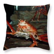 Alaskan King Crab 5D24125 Throw Pillow by Wingsdomain Art and Photography