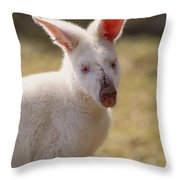 Albino Wallaby Throw Pillow by Art Wolfe