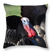 All Turkey Throw Pillow by Todd Hostetter