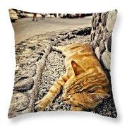 Alley Cat Siesta In Grunge Throw Pillow by Meirion Matthias