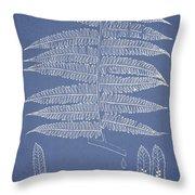 Alsophila Ornata Throw Pillow by Aged Pixel