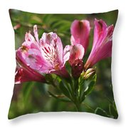 Alstroemeria Throw Pillow by Rona Black