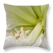 Amaryllis Throw Pillow by Adam Romanowicz