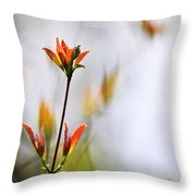 Amber Glow Throw Pillow by Christina Rollo