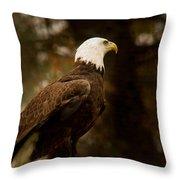 American Bald Eagle Awaiting Prey Throw Pillow by Douglas Barnett