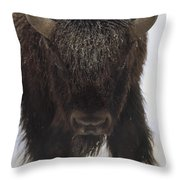 American Bison Portrait Throw Pillow by Tim Fitzharris