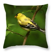 American Gold Finch Throw Pillow by Sandy Keeton