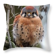 American Kestrel Throw Pillow by Angie Vogel