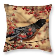 American Robin Eating Winter Berries Throw Pillow by Inspired Nature Photography Fine Art Photography