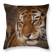 Amur Tiger 4 Throw Pillow by Ernie Echols