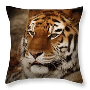 Amur Tiger Throw Pillow by Ernie Echols