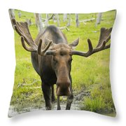 An Elk Standing In A Puddle Of Water Throw Pillow by Doug Lindstrand